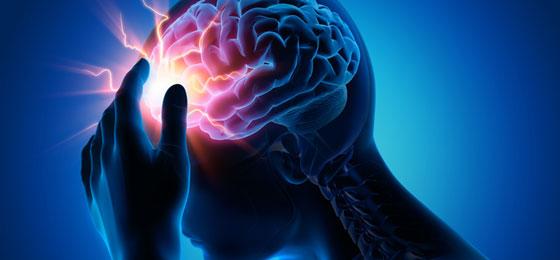 Cerveau stylisé. © FNS