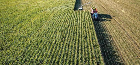 A maize monoculture. © Keystone