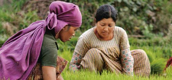 Zwei Frauen bei der Arbeit in einem Reisfeld © François Chappuis, Sanjib Sharma, David Warrell